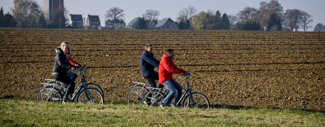 Fietsers in de witloofroute